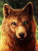 Fair wolf аватар